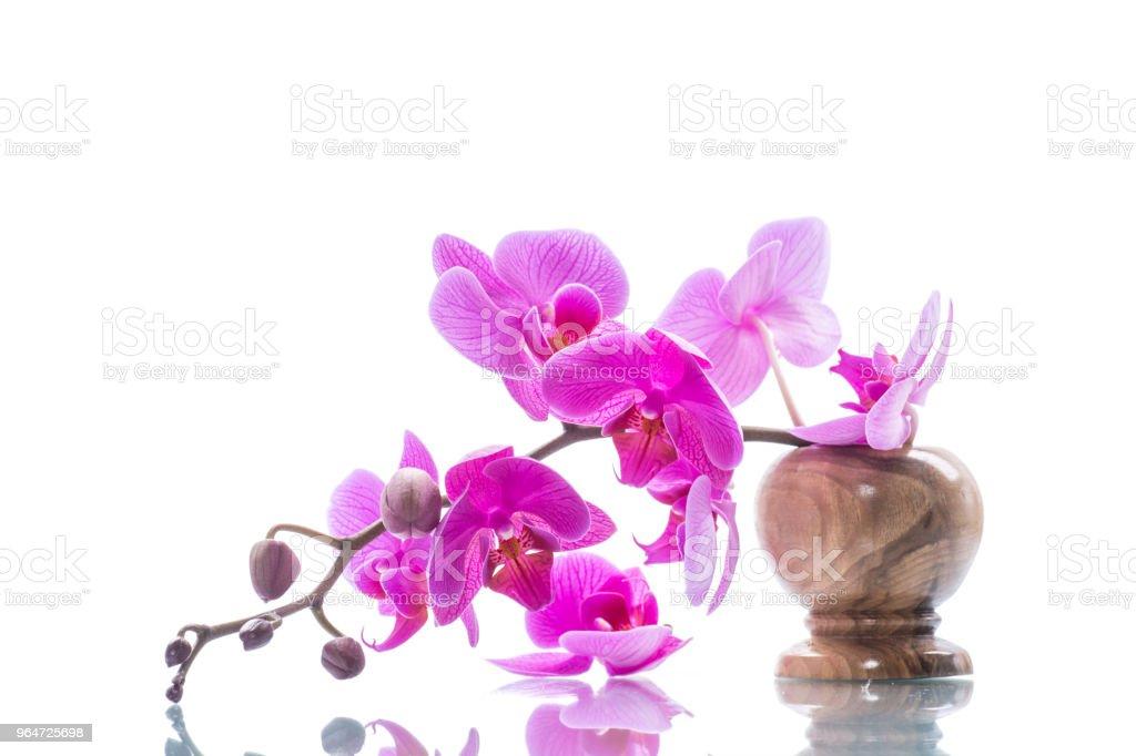 beautiful Phalaenopsis orchid flowers royalty-free stock photo