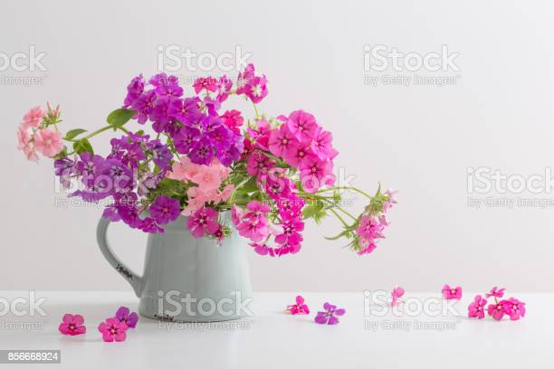 Beautiful phloxes in jug on white background picture id856668924?b=1&k=6&m=856668924&s=612x612&h=ubmlnpb pngmjoo4zlqspnncczgnd1tagqc7tixmdfg=