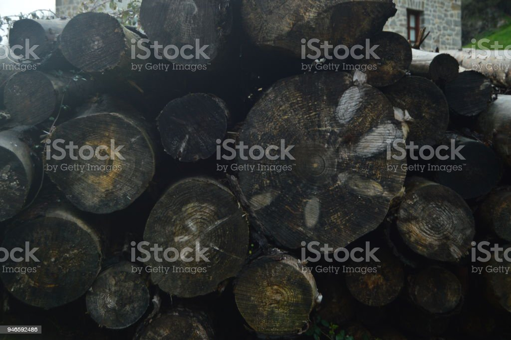 Beautiful Photo Postcard With A Mountain Of Freshly Cut Trunks Wet By Rain Superbly Placed In The Natural Park Of Gorbeia. Tree Nature Landscapes. stock photo
