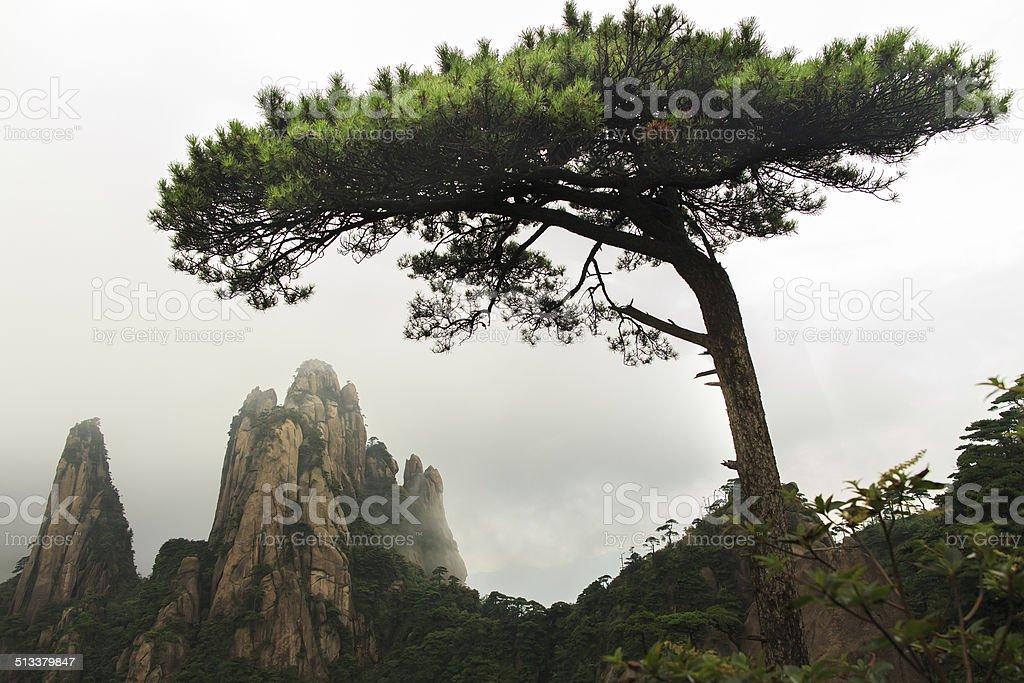 Wunderschöne in pine Mountain – Foto