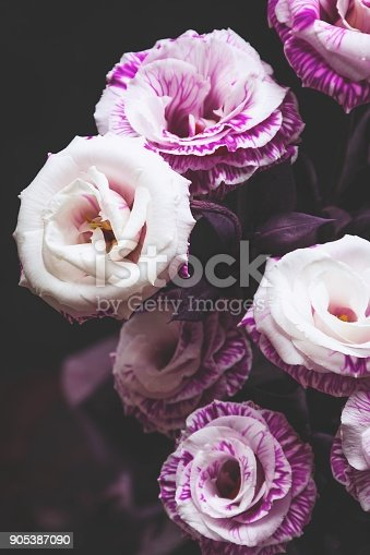 istock Beautiful pink and purple roses on dark background 905387090