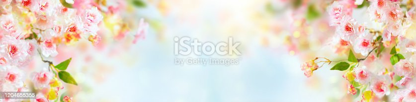 909680446 istock photo Beautiful pink and white cherry flowers 1204655355