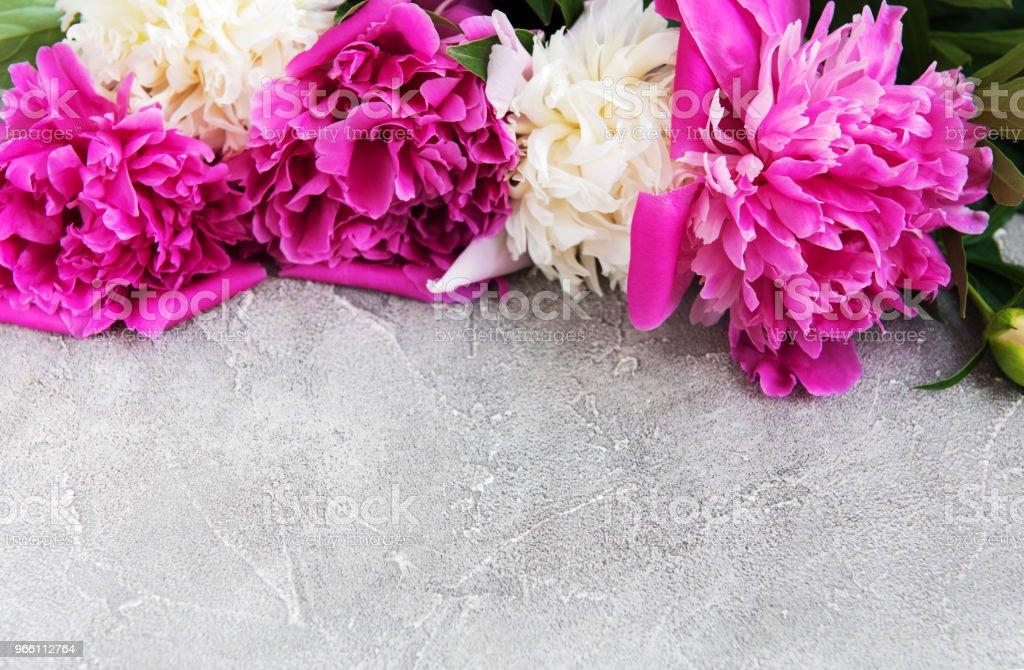 schöne rosa und weiße Pfingstrose Blumen - Lizenzfrei Baumblüte Stock-Foto
