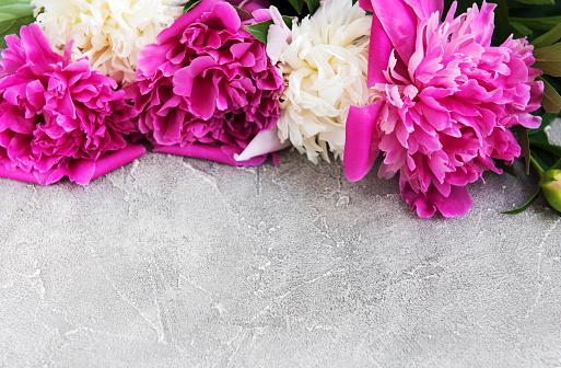 Schöne Rosa Und Weiße Pfingstrose Blumen Stockfoto und mehr Bilder von Baumblüte