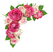 istock Beautiful pink and white rose flowers in a corner arrangement 1136700963