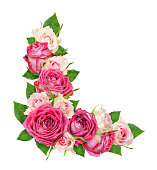 istock Beautiful pink and white rose flowers in a corner arrangement 1136700967