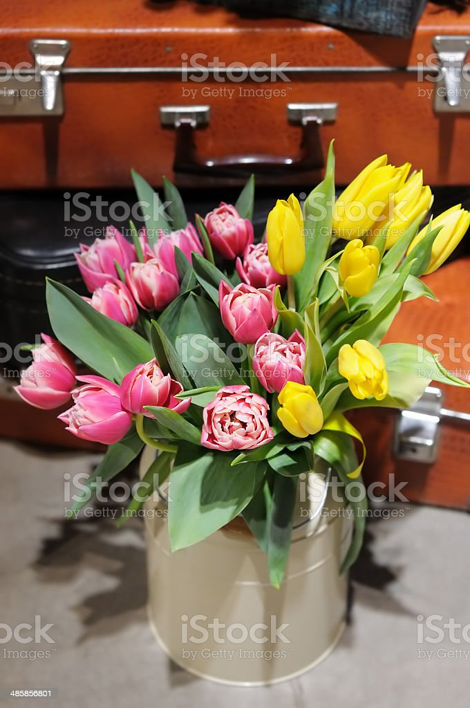 Beautiful pink and yellow tulips royalty-free stock photo