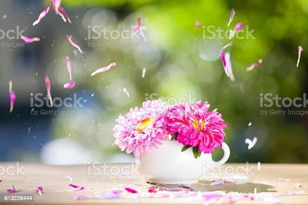 Beautiful pink aster flowers and falling petals picture id613226444?b=1&k=6&m=613226444&s=612x612&h=1rfxrwbpuzk8inqrq0tna7ajitkjjmcmwtb81x8fcys=
