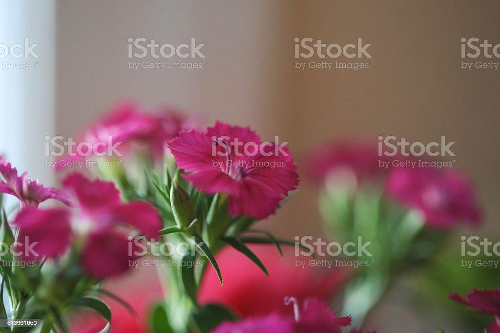 美しいピンクのブーケフラワー ロイヤリティフリーストックフォト