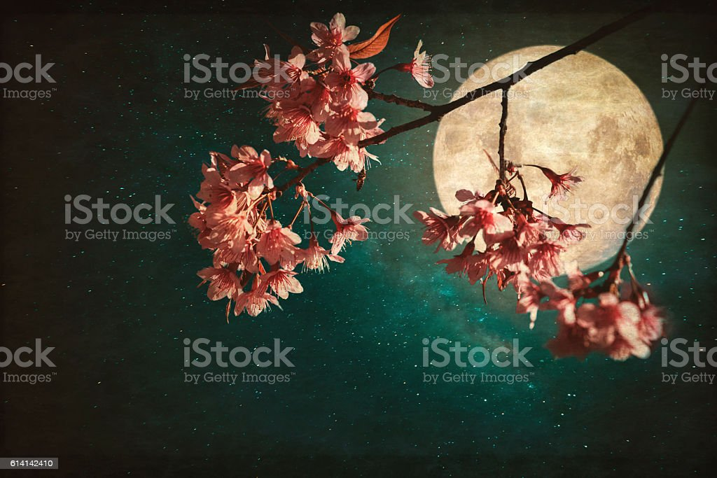Beautiful pink cherry in night stock photo