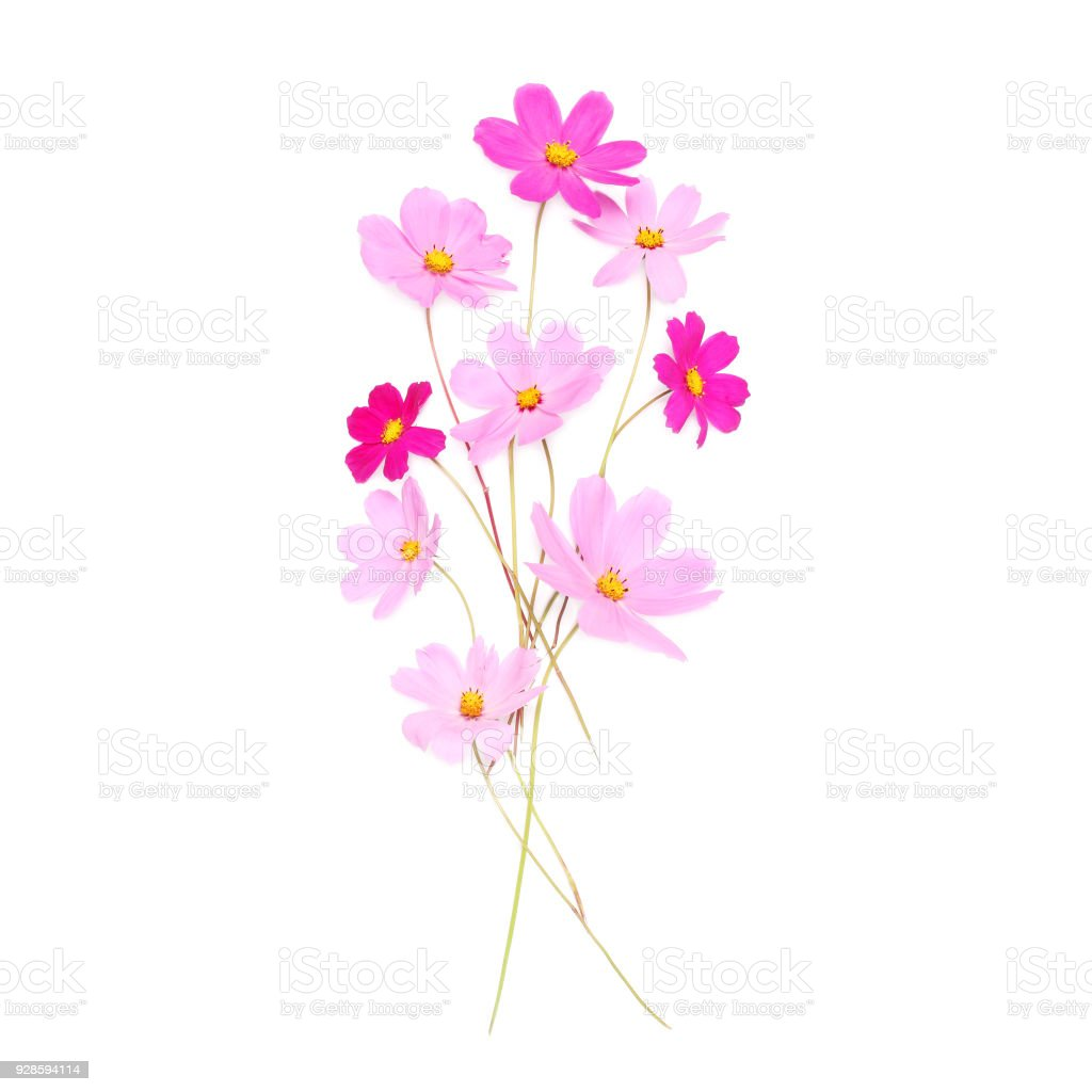 Beautiful Pink Cute Flowers Isolated On A White Background Flat Lay