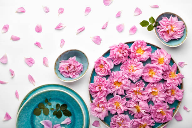 Beautiful pink damask roses in turquoise plate on white background. stock photo