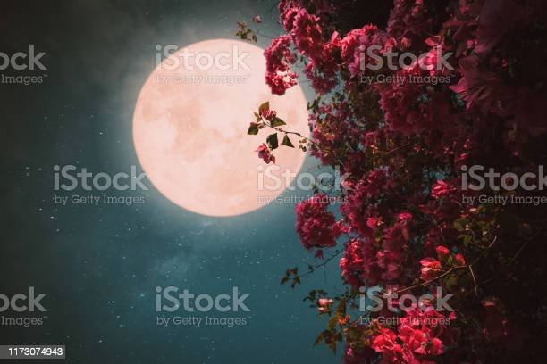 Photo of Beautiful pink flower blossom in night skies with full moon