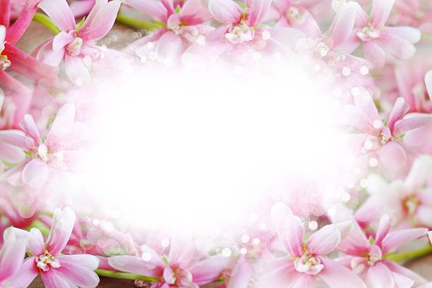 Royalty free pink flower border and frame in vintage background beautiful pink flower border abstract bokeh on white background stock photo mightylinksfo