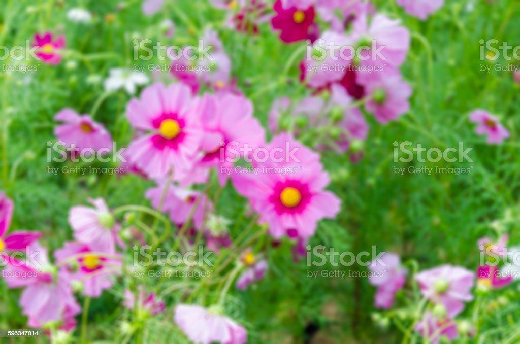 Beautiful pink flowers, Filter blur royalty-free stock photo