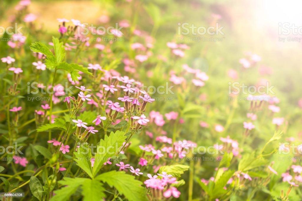 Foto De Beautiful Pink Flowers In The Garden With Bokeh Background E Mais Fotos De Stock De Amarelo Istock