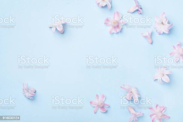 Beautiful pink flowers on blue background top view pastel colors flat picture id916033124?b=1&k=6&m=916033124&s=612x612&h=mt2pxob8usujjm mggxtssqfslbgsuezc4bhru9b1tw=