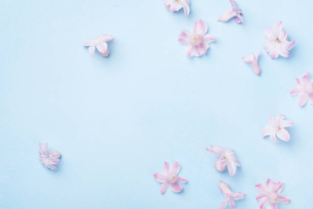 Beautiful pink flowers on blue background top view pastel colors flat picture id916033124?b=1&k=6&m=916033124&s=612x612&w=0&h=fw0di3c5snq6zs 0e giyfwtxbng4 8fdrnylfzs1ps=