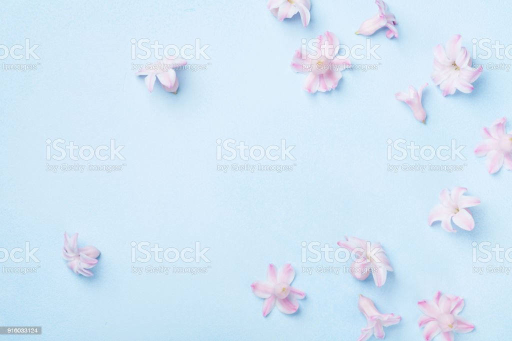 Beautiful pink flowers on blue background top view. Pastel colors. Flat lay style. Mother or woman day greeting card. stock photo