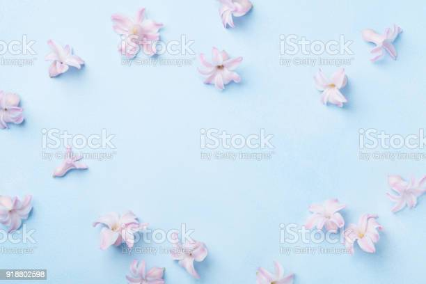Beautiful pink flowers on blue table top view punchy pastel colors picture id918802598?b=1&k=6&m=918802598&s=612x612&h=cclqxesk25nkw0p7 atspd dy48eibuvpfjj7wbdura=