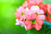 istock Beautiful pink flowers 1069115964
