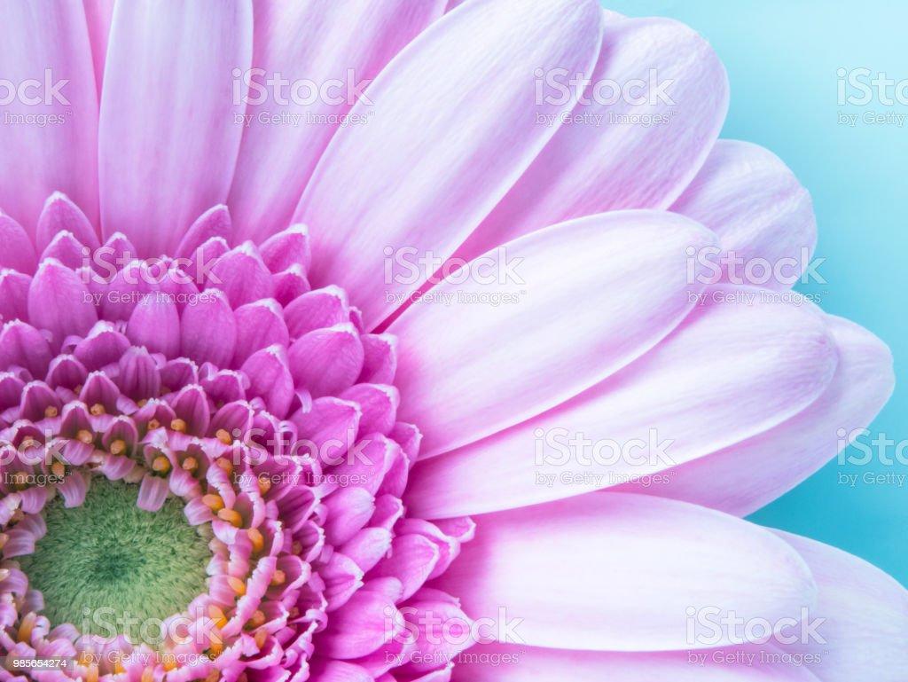 美しいピンクのガーベラの花クローズ アップ マクロ壁紙背景