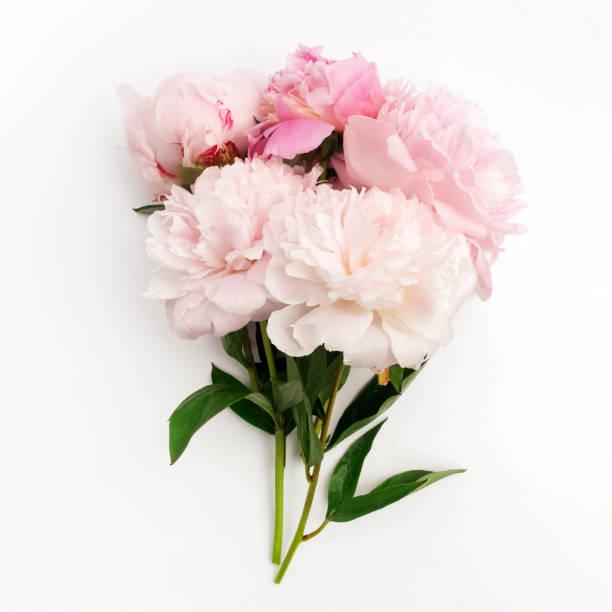 Schöne rosa Peonie Blume auf hellem Hintergrund – Foto