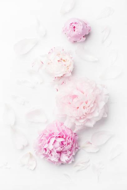 Beautiful pink peony flower background picture id900893740?b=1&k=6&m=900893740&s=612x612&w=0&h= lauekdm3u71ez7ia4vvxgn887tvvewjerzqcyzqunk=