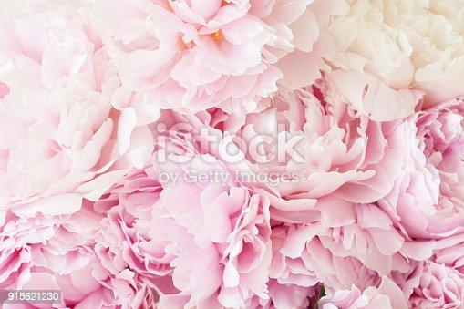 istock beautiful pink peony flower background 915621230