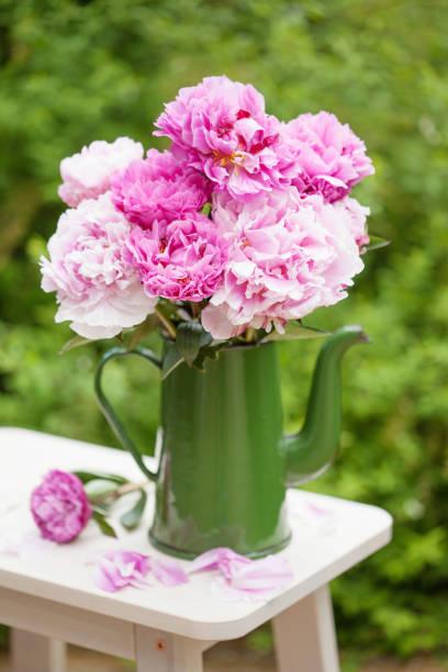 schöne rosa pfingstrose blumen blumenstrauß im garten - pfingstrosen pflege stock-fotos und bilder