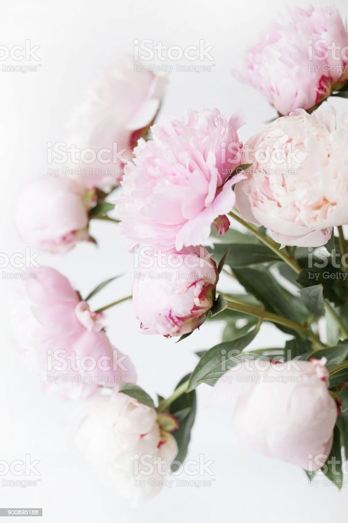 Beautiful Pink Peony Flowers Bouquet In Vase Stock Photo More