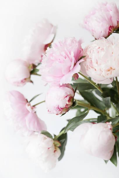 schöne rosa pfingstrose blumen blumenstrauß in einer vase  - pfingstrosen pflege stock-fotos und bilder