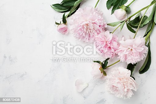 istock Beautiful pink peony flowers on white table with copy space for your text top view. Flat lay. 806870408