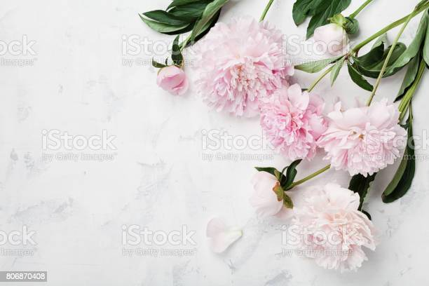 Beautiful pink peony flowers on white table with copy space for your picture id806870408?b=1&k=6&m=806870408&s=612x612&h=lqqw2rngjnfgp1rf5nigdcl8yeiqx3vitblct3upkau=