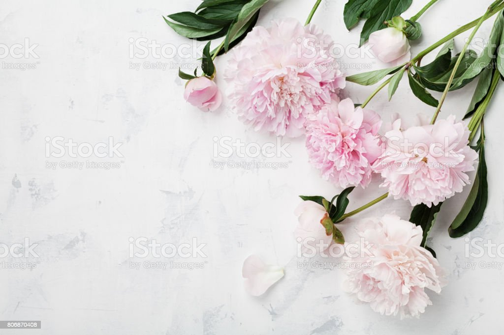 Beautiful pink peony flowers on white table with copy space for your text top view. Flat lay. stock photo