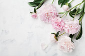 Beautiful pink peony flowers on white table with copy space for your text top view. Flat lay.