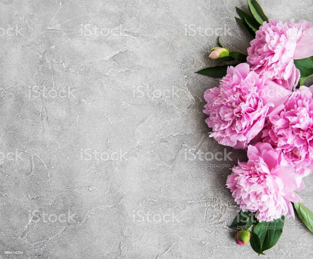 beautiful pink  peony flowers royalty-free stock photo
