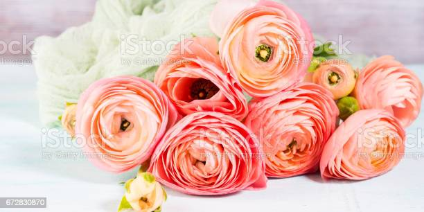 Beautiful pink ranunculus bouquet on turquoise picture id672830870?b=1&k=6&m=672830870&s=612x612&h=fjuj2bx8rt4agfkmbkckla7djhdfvrhcy gzxudhj7o=