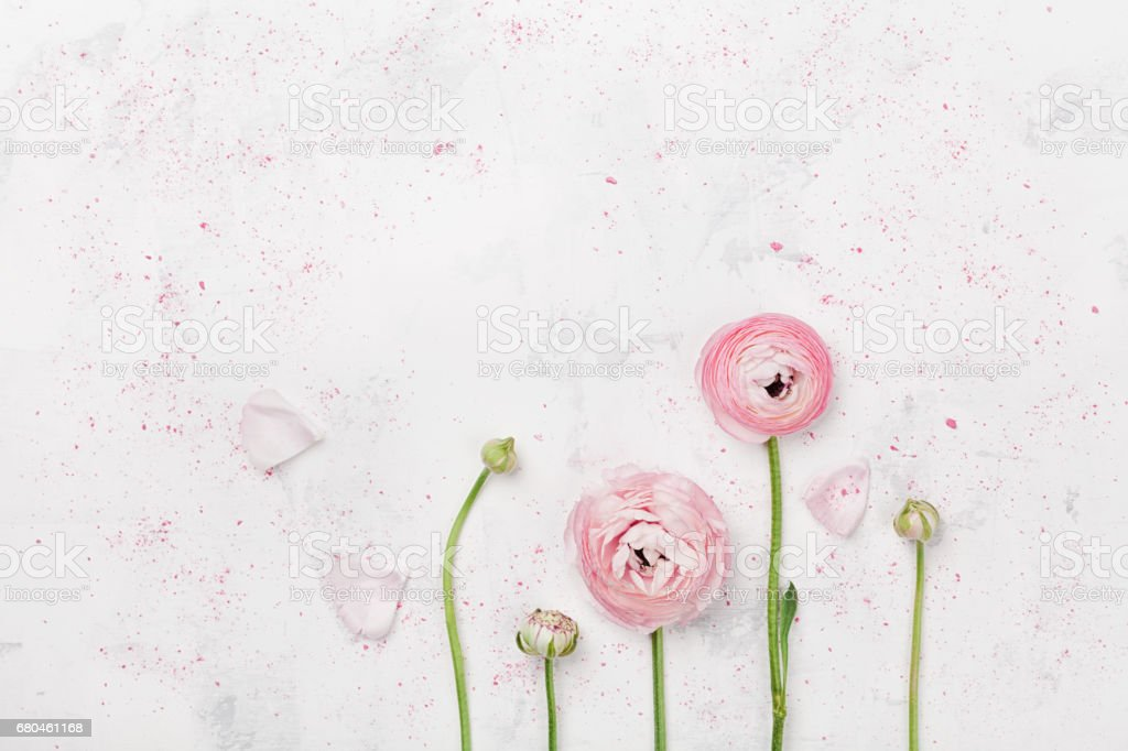 Beautiful pink ranunculus flowers on white table. Wedding mockup in flat lay style. stock photo