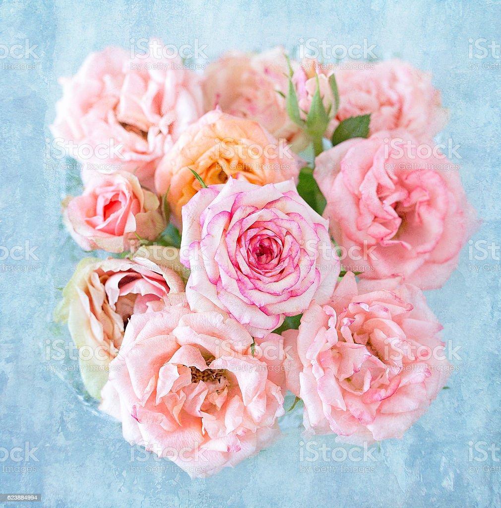 Beautiful pink rose flowers. Lizenzfreies stock-foto