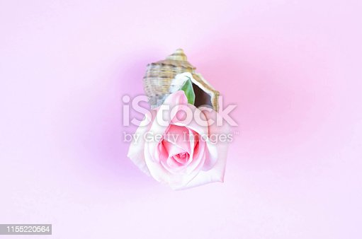 1147995495 istock photo Beautiful pink rose in a large seashell. 1155220564