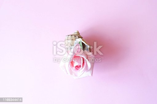 1147995495 istock photo Beautiful pink rose in a large seashell. 1169344414