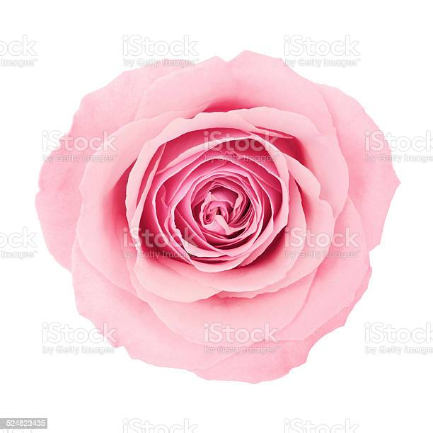 Beautiful pink rose picture id524823435?b=1&k=6&m=524823435&s=612x612&h=cz2qf2q0jjavb9tbd icrwdjsxipe5dqwqcayibxcqy=