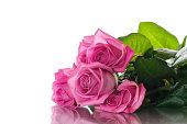 istock Beautiful pink rose 681828886