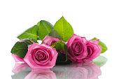 istock Beautiful pink rose 681828942