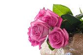 istock Beautiful pink rose 815895536