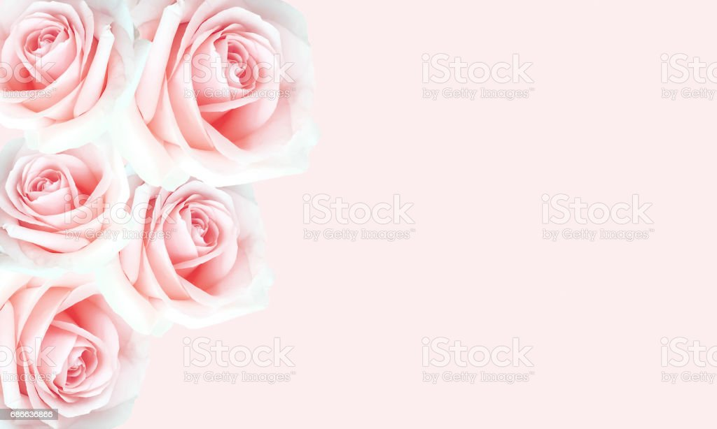 Beautiful pink roses background for Valentine's day. royalty-free stock photo