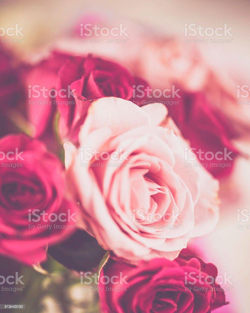 Beautiful pink roses background stock photo