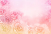 istock beautiful pink roses flower border on soft background for valentine or wedding card 991832976