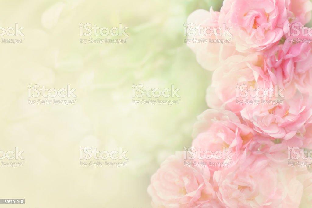 美麗的粉紅色玫瑰花朵邊框軟背景情人節圖像檔